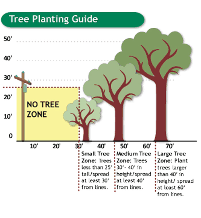 Tree Planting Guide graphic